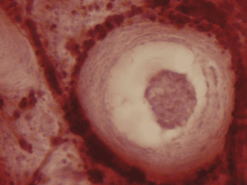 celulas